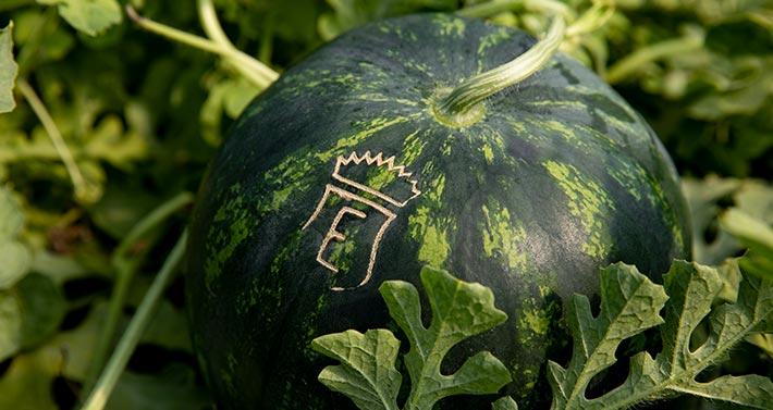 Azienda Agricola La Palazzina - I frutti del Conte Guarienti. Primo piano anguria o cocomero