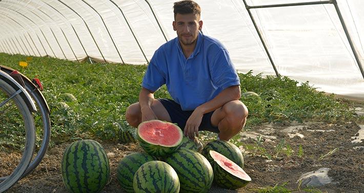 Azienda Agricola Scarlassara Natalino; Massimo Scarlassara in serra con angurie appena raccolte e una aperta per verificare la qualità