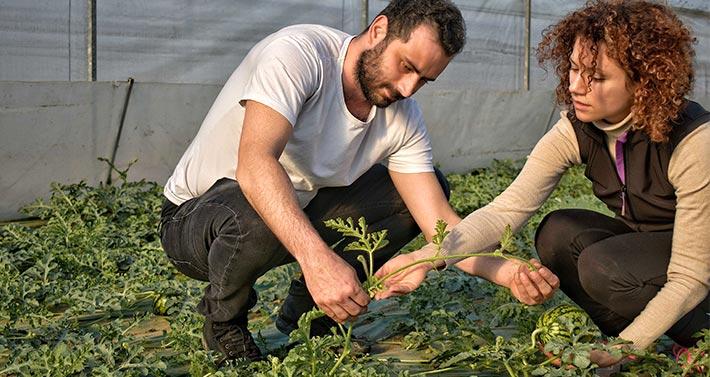 Zone Vocate: Daniele e Giulia Anceschi, titolari dell'azienda agricola, controllano piante di anguria