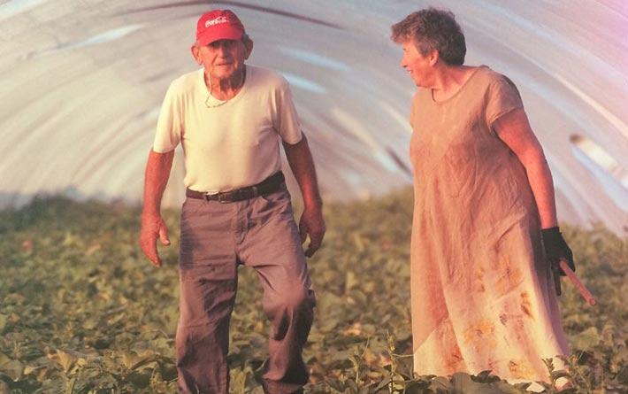 Società Agricola Brioni: i brioni in serra di angurie